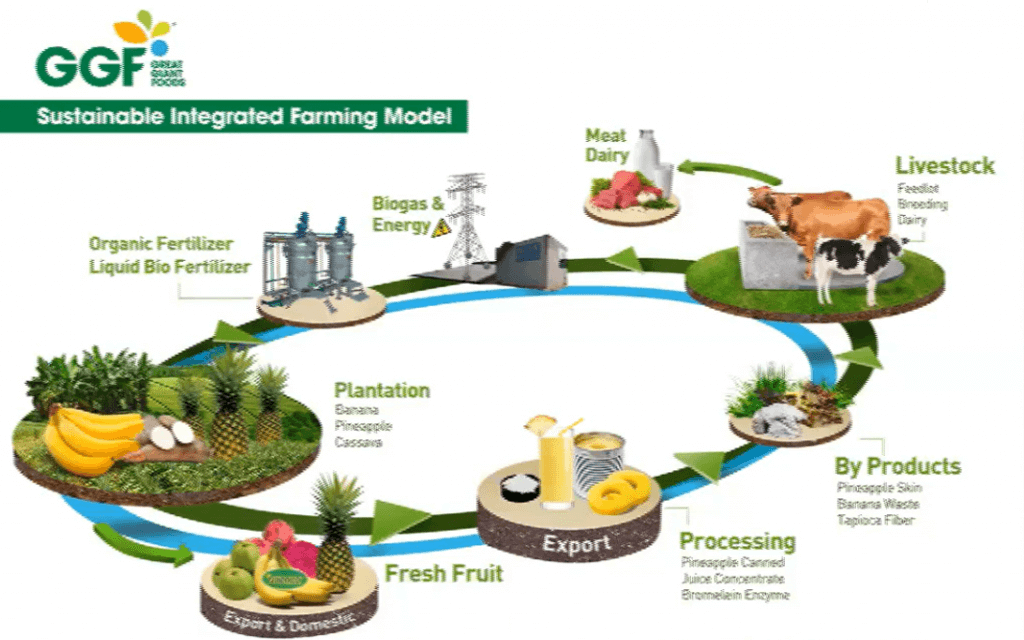 suistainable integrated farming model di Great giant foods GGF